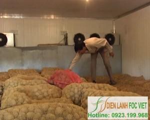 Bảo quản khoai tây giống bằng kho lạnh nông sản
