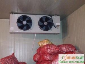 Kỹ thuật sản xuất khoai tây giống | Kho lạnh bảo quản khoai tây giống