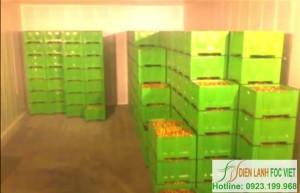 Công nghệ bảo quản trái cây bằng kho lạnh