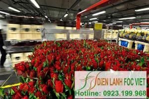 Kho lạnh hoa tươi | Lắp đặt kho lạnh bảo quản hoa tại Hà Nội