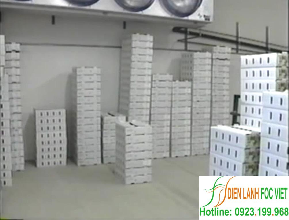 Dịch vụ lắp đặt kho lạnh rau quả bảo quản chuyên nghiệp