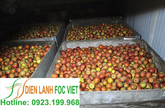 lắp đặt kho lạnh bảo quản táo