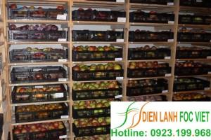 Bảo quản lạnh táo | Kho lạnh bảo quản táo
